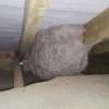 7 steps for Wasp Nest Removal From Loft