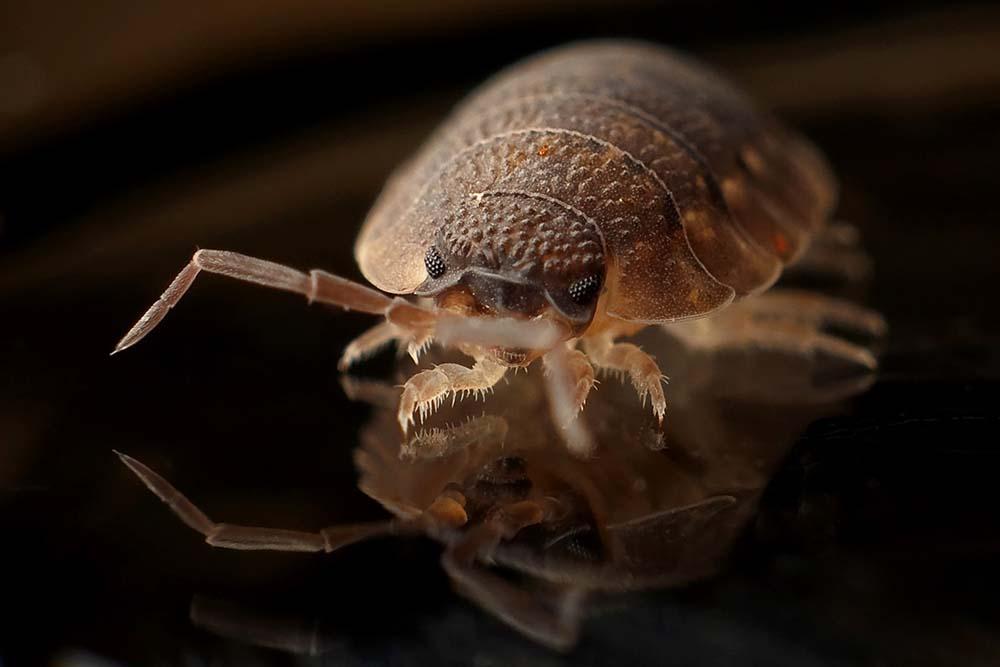 bed bug infestation birmingham
