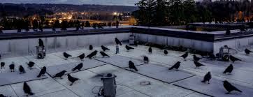companies that remove pigeons uk