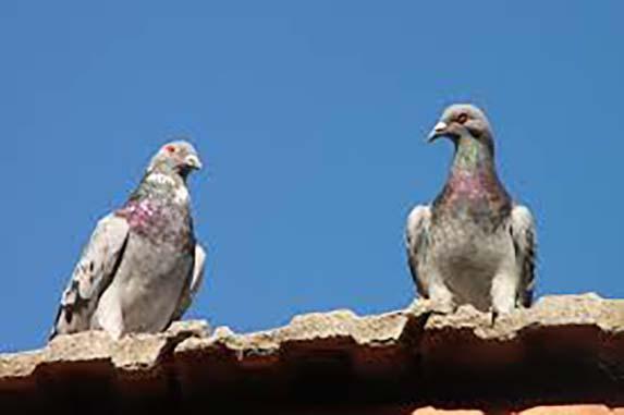 get rid of birds