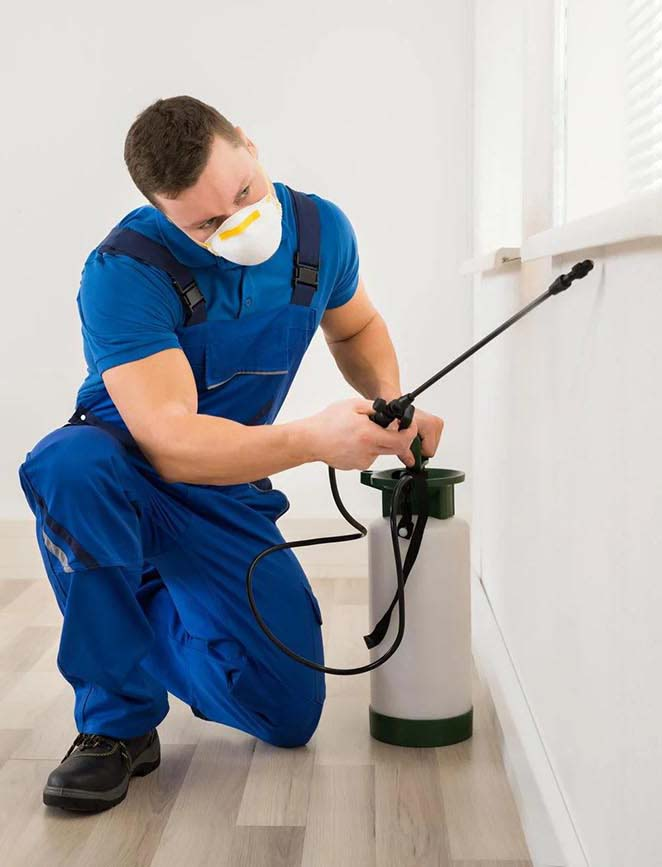 pest control services birmingham west midlands